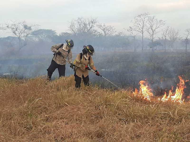 Control de incendios y de abejas africanizadas, mayor actividad bomberil durante 2020