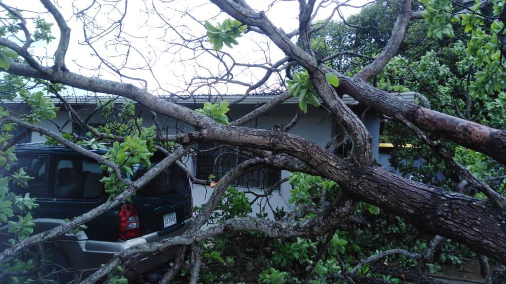Las caídas de árboles no se han dado víctimas fatales.