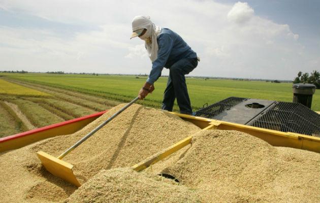 Comisión de Presupuesto aprueba traslado de partida por $27.9 millones al Mida para pago a los productores