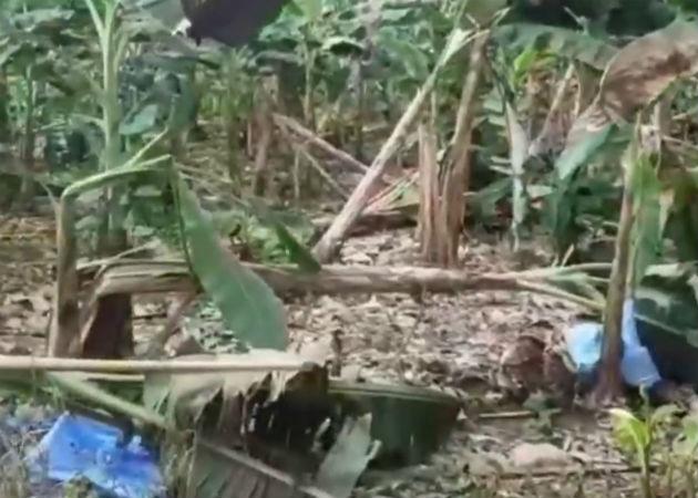 Fuertes lluvias dejan afectaciones en cultivos de plátanos en Bocas del Toro