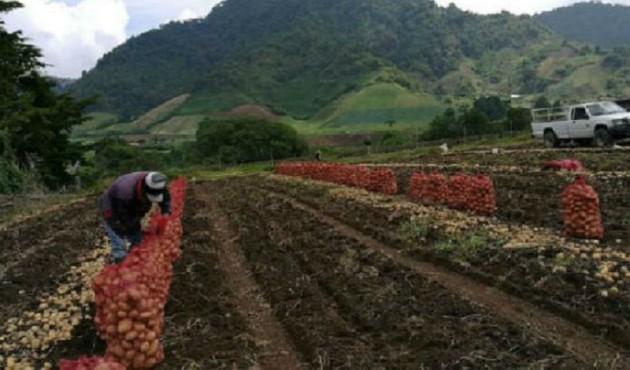 Instituto de Seguro Agropecuario desembolsa pago adeudado a productores