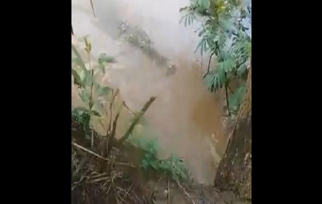 Piden pena máxima por arrojar perrita a río en Parita para que fuera devorada por un lagarto