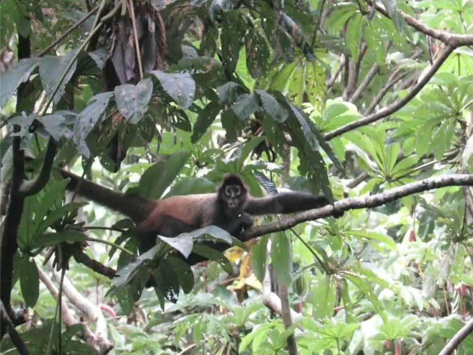 Esta especie está incluida entre los animales en peligro crítico de extinción. Foto: Mayra Madrid.