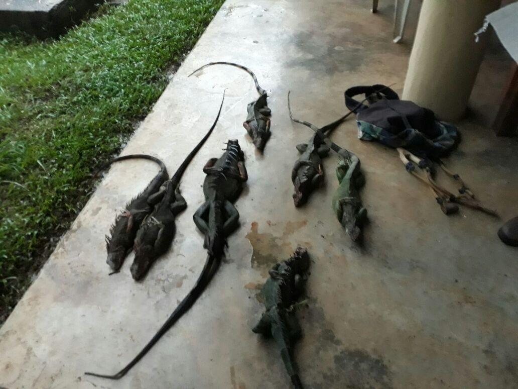 La crianza e importación de estas especies no se permitirá. Fotos: EFE/Archivo.