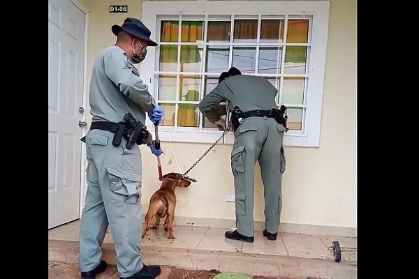Policía Nacional rescata a dos perros en evidente estado de maltrato en las últimas 24 horas