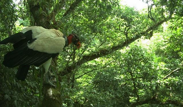 Publican lista de los registros de algunas aves de la isla Jicarón y Jicarita