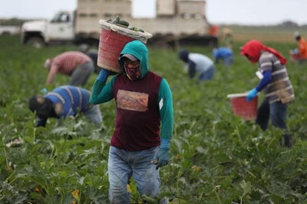 Industriales y los campesinos pugnan por control de las semillas