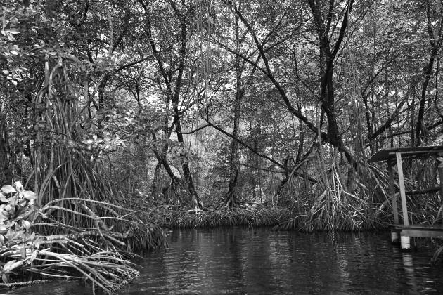 El humedal San san pond sak en Bocas del Toro. Foto: Cortesía.