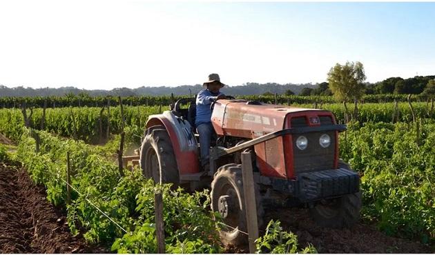 Sector agro sostiene economía brasileña
