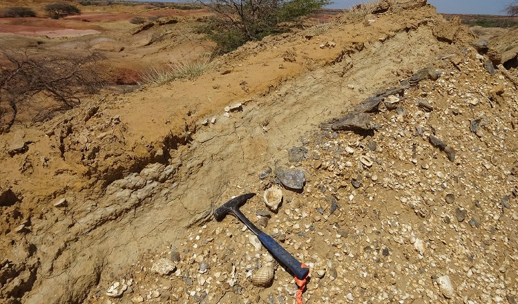 Descubren fragmentos fósiles de bagre
