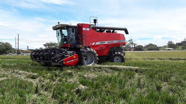 Productores de arroz en Chiriquí piden que se elimine la regulación del precio de este rubro