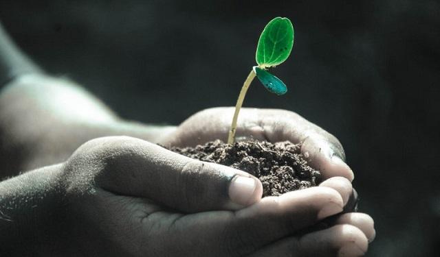 Se prevé sembrar aproximadamente 500 plantones. Foto: Ilustrativa / Pixabay