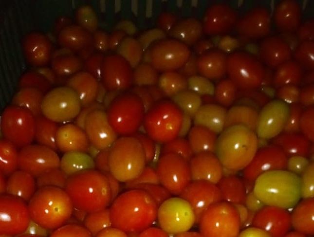 Decomisan presunto contrabando de tomate y detectan a cinco ilegales en el puesto de control de Guabalá