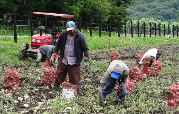 El agro adelanta aplicación de avanzadas tecnologías de producción