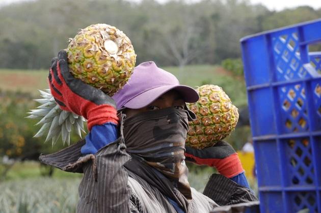 Lazarán plan para Mipymes agroindustriales