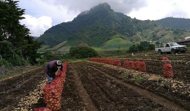 Los productores nacionales confían en la buena voluntad del Legislativo. Foto/Archivo