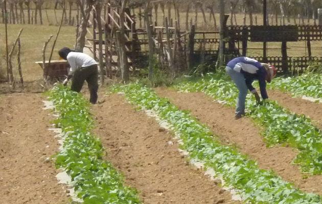 Inundaciones afectan producción de papa y cebolla en Tierras Altas