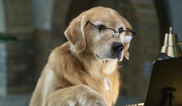 'Como Perros y Gatos 3: ¡Patas Unidas!': Una cinta para unir a familias y mascotas