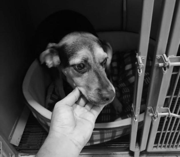 Maltratadores de animales padecen severos problemas psicológicos