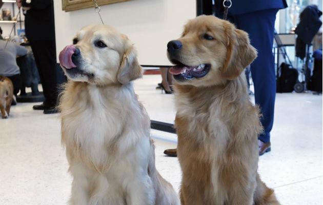 Dos canes posan en el Museo del Perro en Nueva York. Foto: AP.