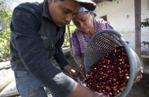 El café tiene imagen de ser pionero en agricultura sostenible, pero falla en la cadena de valor que no es  viable en lo social. EFE