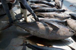 Los atuneros mexicanos se han quejado de pérdidas millonarias por las restricciones Cortesía