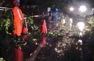 En Kuna Nega, personal de Sinaproc atendió caída de un árbol. Sinaproc