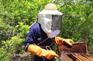 """Noriel Tello cumple varios objetivos con """"Beehouse"""". Como apicultor más que solo emprender, vela por la supervivencia de las abejas. Foto: Cortesía."""