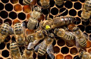 Uno de los proyectos va enfocado en las abejas.