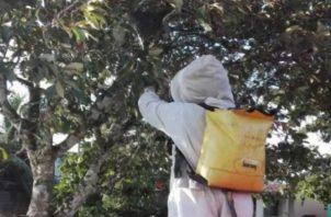 Los bomberos cada día atienden más casos de ataques de abejas africanizadas. Foto/Mayra Madrid
