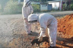 Rociaron espuma en el lugar donde se encontró el panal de las abejas. Foto/José Vásquez