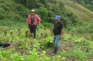 Productores agropecuarios están preocupados por la dura situación. Foto: Thays Domínguez.