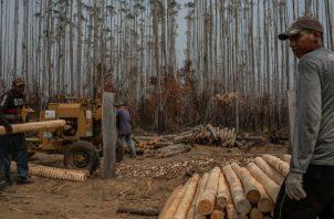 Agricultores brasileños ven la quema del bosque como parte de la vida. Recolectando madera. Foto/ Victor Moriyama para The New York Times.