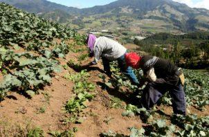 La mayoría de los afectados por los cambios climáticos son pequeños productores que viven alejados de los centros urbanos.