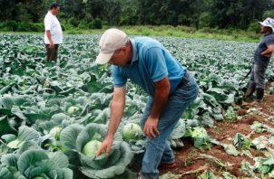 Está dirigido a mejorar la rentabilidad de las organizaciones de agricultores