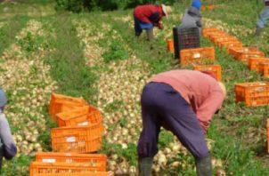 El sector agro hasta agosto de 2018 ha generado unas 265 mil plazas de empleo.