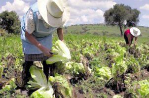 La Cámara de Comercio indicó que se debe establecer una estrategia nacional para el desarrollo del sector agro.