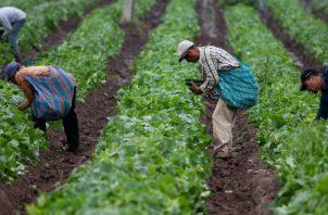 La agroindustria se ha convertido en una de las grandes apuestas del Gobierno colombiano. Foto/Efe