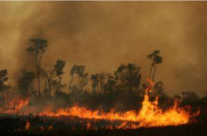 Ambientalistas dicen que líderes mundiales y corporativos deben ser criminalmente responsables de los desastres ecológicos. Una escena del estado brasileño de Amazonas, este mes. Foto/ Bruno Kelly/Reuters.