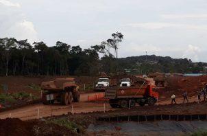 La ampliación de la Panamericana provocará la deforestación de 91 hectáreas.