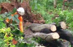 Caída de árbol en Río Abajo. Foto del Sinaproc
