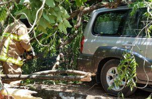 Los bomberos acudieron al lugar donde cayó el árbol. Foto: Mayra Madrid.