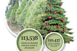 En los últimos cuatro años han ido en aumento la cantidad de contenedores con arbolitos que entran al país