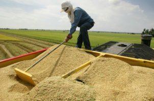 Para el 2018 la proyección de siembra es de 68 mil hectáreas. Archivo