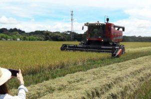 Las agrupaciones productoras de arroz a nivel nacional han solicitado al ministro Eduardo Enrique Carles convocar a una reunión de agro cadena del arroz