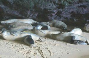 Se ha presentado una denuncia por la muerte de las focas en Nueva Zelanda. Foto: EFE
