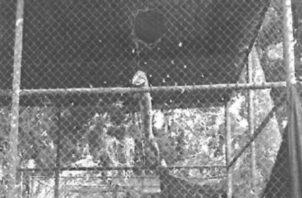 Este es el hueco que estaba en la parte superior de la jaula. Foto de cortesía