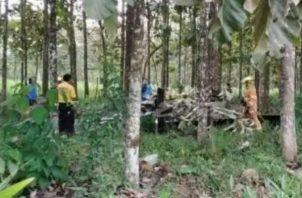 El piloto se estrelló contra una plantación de árboles de teca.