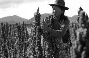 Productora de quinua real en los departamentos de Oruro y Potosí, Bolivia. Foto: EFE.