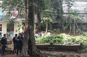 La medida de la tala de los árboles en Brooklincito fue frenada personalmente por la alcaldesa encargada de la ciudad de Panamá, Raisa Banfield.